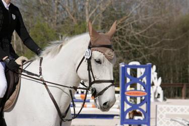 Grey warmblood mare by screwer24601
