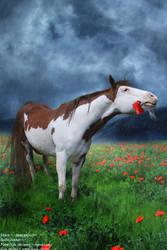 Poppy by xkatalyst33x