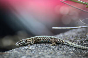 Reptile by AxelMyro
