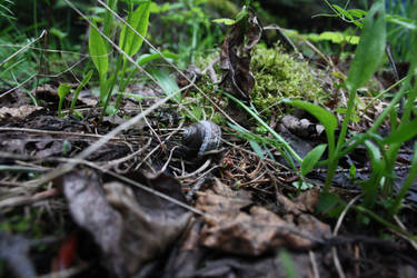 Snail Land by victizzle-mofo
