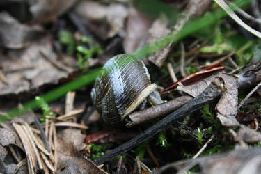 Snail Slime by victizzle-mofo