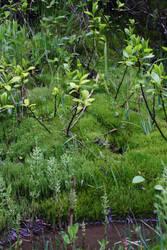 Lush Greenery by victizzle-mofo