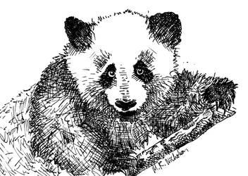 El oso panda gigante by glow-in-the-dark-fez