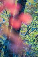 Autumn Mosaic VI by burningmonk