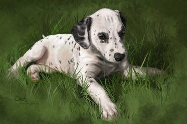 Comm: Dalmatian puppy by Sharpk