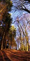 Leaf Lane by adamlack