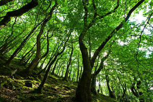 Overwhelmingly Green by adamlack