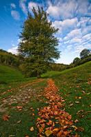 Autumn Trail by adamlack