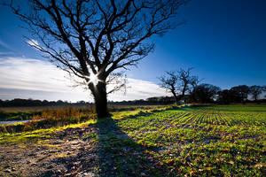 Winter Sunshine by adamlack