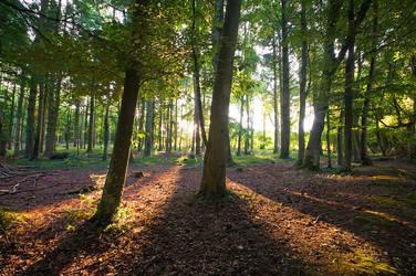 The Woods by adamlack