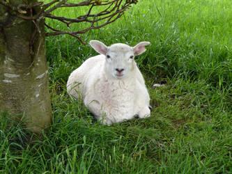 Mr Sheepy by Arkz86