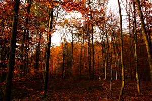 Autumn Colors by NikaTuwaPhotography