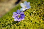 Greenish violet by LuciusThePope