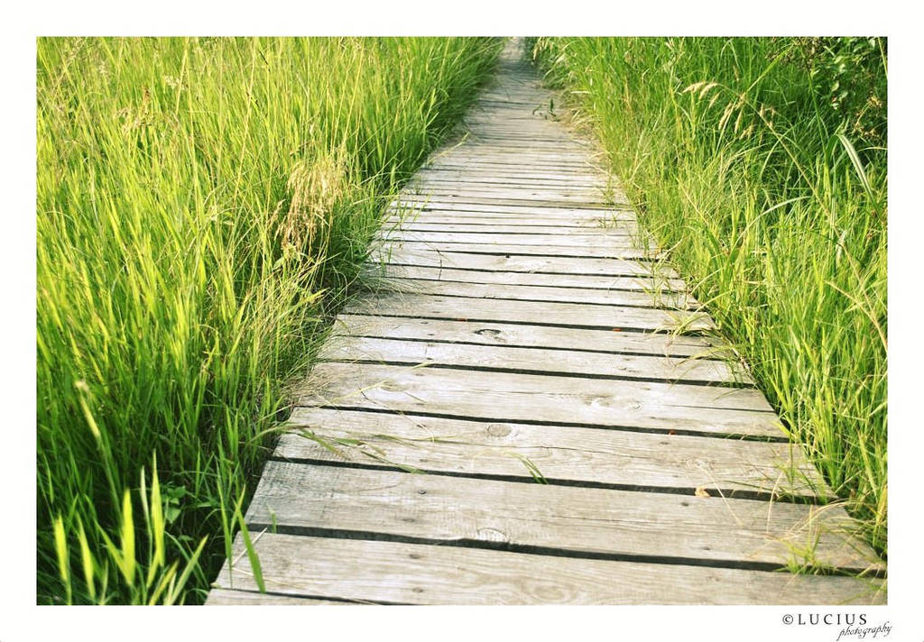 Path in grass by LuciusThePope