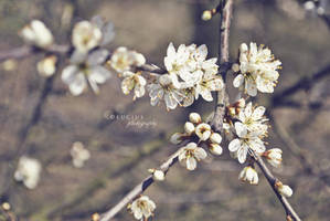 Blooming spring II. by LuciusThePope
