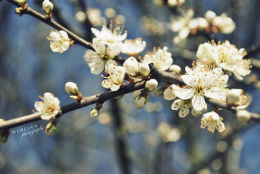 Blooming spring III. by LuciusThePope