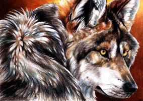 Wolf study by OFools