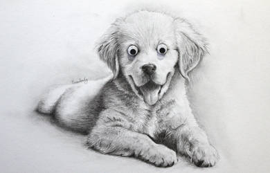 Dog by EvanDonkey
