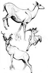 Greater Kudu studies by Tempted-Fate