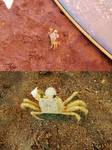 Crustaceo by viveranimes
