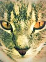 Cat 5 by MakintoshBrigade