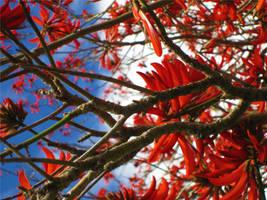 Flame tree by MakintoshBrigade