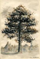 Grandmas pine by w176