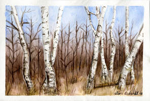 Birchwood spring by w176