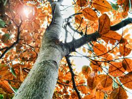 holding back autumn by KanutoX