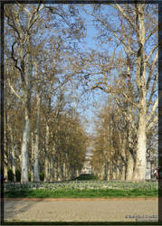 Trees in spring by criss-ac