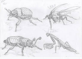 Insects sketches by Kaldrinn