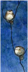 Sleepy Owls by FionaCreates