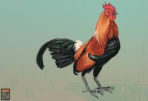 Bird Commish - Kamiki 3 by FionaCreates