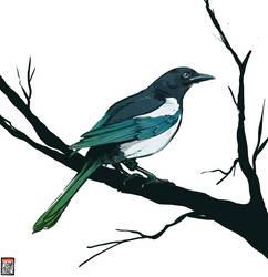 Magpie by FionaCreates
