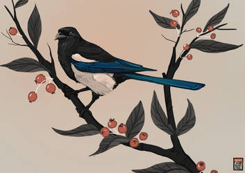 Magpie for themothworks by FionaCreates