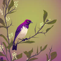 Violet Backed Starling by FionaCreates