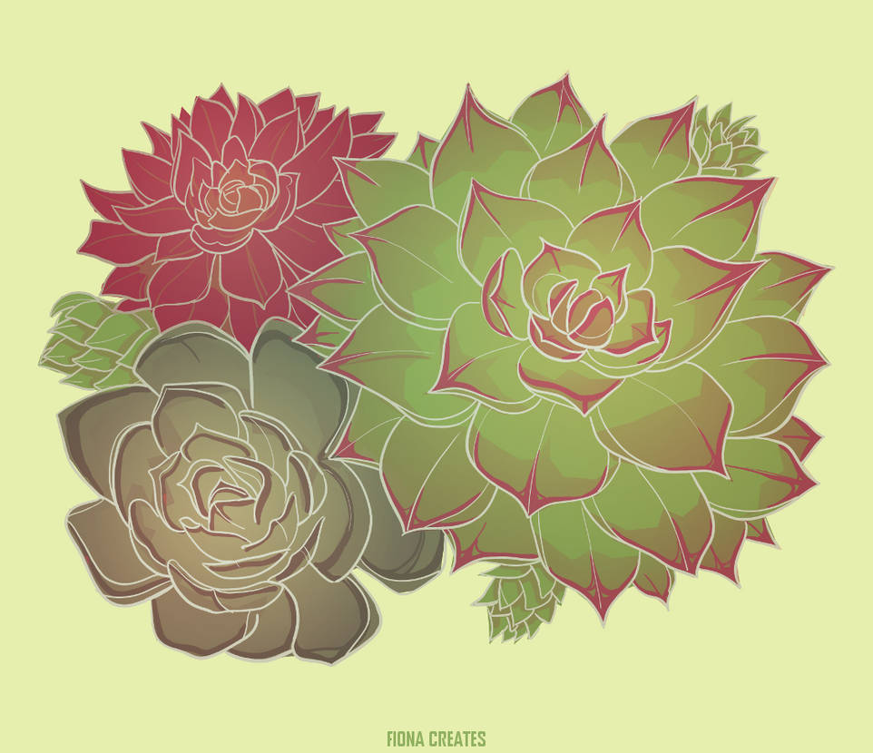 Succulent by FionaCreates
