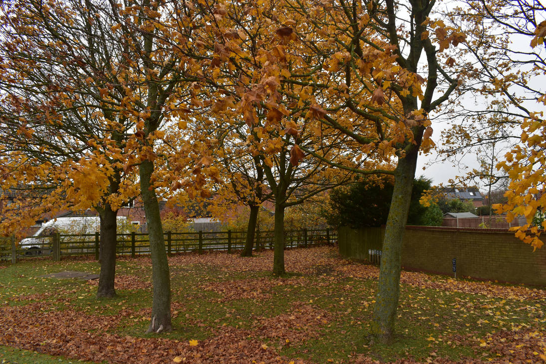 trees at autumn by g8ut