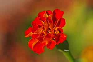 Summer color 1 by jcphotos
