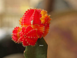 thorny beauty. by jcphotos