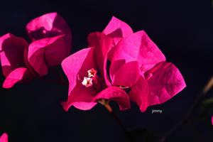Summer flower. by jcphotos