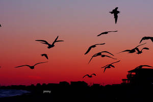 Migration by jcphotos