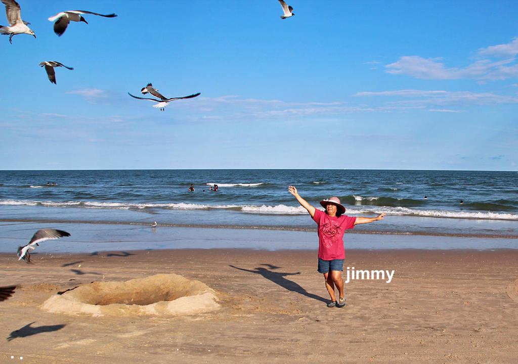 Birds by jcphotos