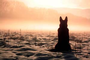 heaven dog by Borderkowa