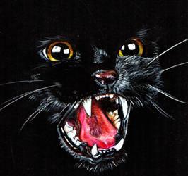 Black Cat by Cathematics