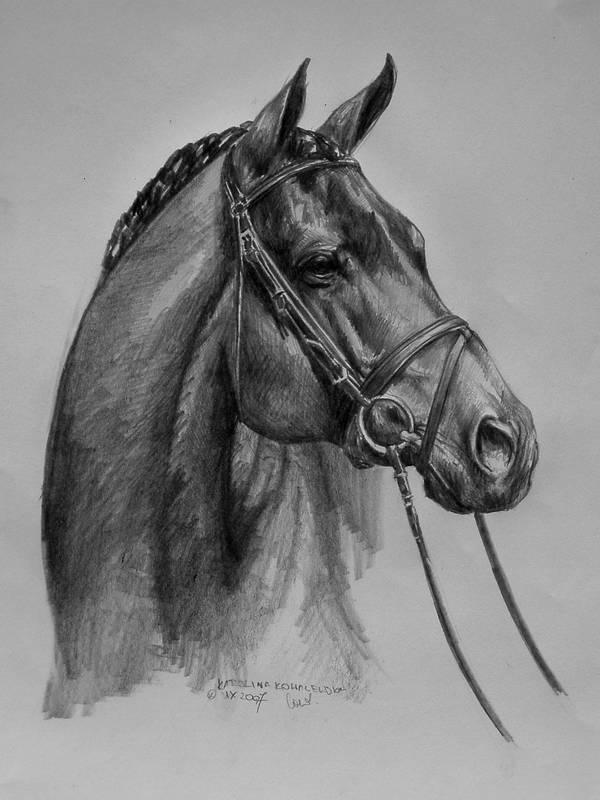 hunter horse by BabysGotATemper