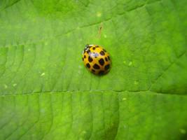 The Most Esteemed Lady Bug by wonderfulrachel