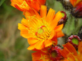 More Orange by wonderfulrachel