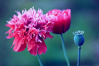 Flower by Syzygi