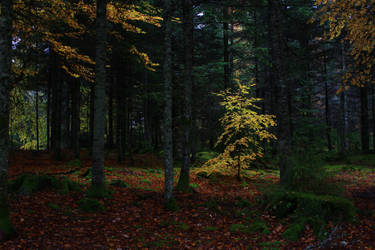 A tree in the forest by Syzygi